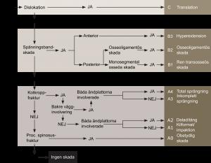 Algoritm för morfologisk klassifikation (enligt AOSpine)